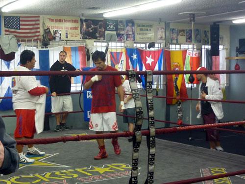 Wildcard Boxing Club